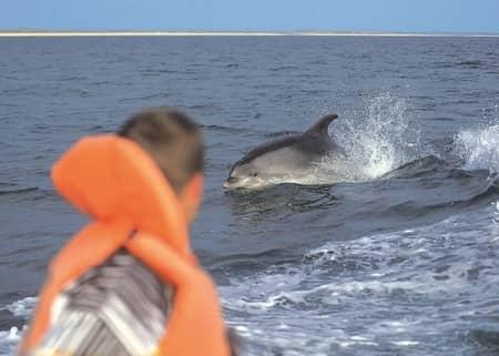 Observação de Golfinhos
